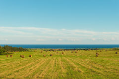 Scenic view of hay stacks on sunny day Royalty Free Stock Photos