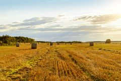 Scenic view of hay stacks on sunny day Royalty Free Stock Image