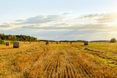 Scenic view of hay stacks on sunny day Royalty Free Stock Photo