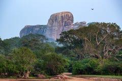 Landscape Yala National Park, Sri Lanka Stock Images
