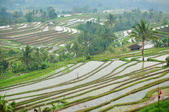 Scenic view of Jatiluwih rice terrace Stock Photos