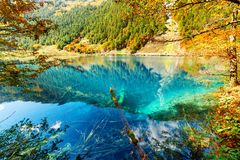 Scenic view of lake with azure water among colorful fall woods royalty free stock image