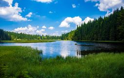 Scenic View of Lake in Forest Stock Photography