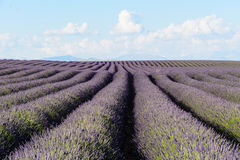 A scenic view of a lavender field in Provence, France. A scenic view of a lavender field in Provence royalty free stock images