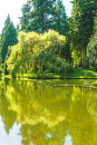 Scenic view of lawn and trees with reflection in the lagoon in botanical garden.. Royalty Free Stock Images
