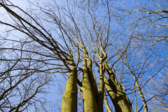 Scenic view looking up at tops of leafy trees and sky in forest Stock Image