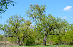 Scenic View of Lush Green Trees with Blue Sky Stock Image
