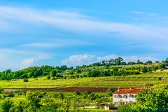 Landscape in Istria region, Croatia. Scenic view at marble landscape in central Istria, famous region in Croatia, Europe royalty free stock photo