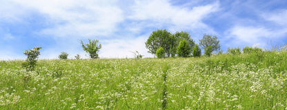 Scenic view of the meadow / Landscape Royalty Free Stock Photo