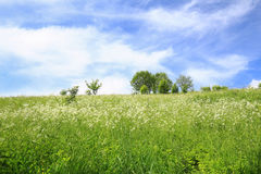 Scenic view of the meadow / Landscape Royalty Free Stock Image