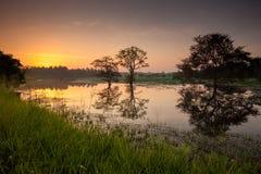 Scenic view at mirror of big lake in Sri Lanka during sunrise stock photos
