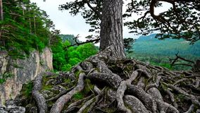 Scenic view of mountain forest stock video footage