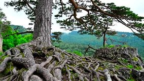 Scenic view of mountain forest stock footage