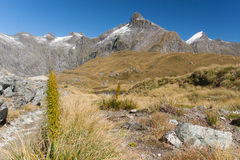 A scenic view of the Mountain in New Zealand - Mackinnon pass – Milford track Stock Photography