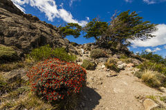 Scenic view in the mountains of Patagonia. Royalty Free Stock Photography
