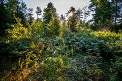 Scenic view of natural meadow and forest royalty free stock images