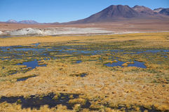 Scenic view  near Machuca in the Atacama Desert. Stock Photo