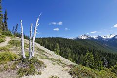 Scenic view near Mt Rainer. Washington, Seattle Stock Photo