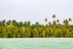 Tropical coastline with palms. Scenic view of ocean and tropical coastline Stock Image