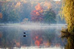 Free Scenic View Of Stromovka City Park In Prague, Czech Republic. Colorful Leaves On Trees And Birds Swimming In A Pond Covered By Fog Stock Photography - 131520732