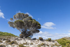 Scenic view over one of the beaches of Rottnest island, Australi Stock Photo