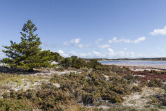 Scenic view over one of the beaches of Rottnest island, Australi Stock Images