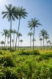 Scenic view over palm trees on tropical island Bubaque, part of the Bijagos Archipelago, Guinea Bissau, Africa.  stock photo