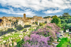 Scenic view over the ruins of the Roman Forum, Italy Royalty Free Stock Photo