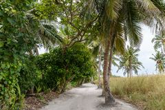 scenic view of palm trees along empty path, stock photo