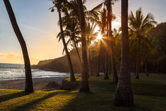 Scenic view of palm trees on Grand Anse beach at sunset.in Reunion island Stock Images
