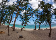 Scenic view of palm trees on hermitage beach in Reunion island Stock Photography