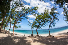 Scenic view of palm trees on hermitage beach in Reunion island Royalty Free Stock Photo