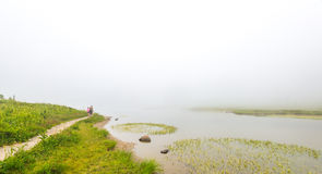 Scenic view of path in the forest,meadow and lake with fog Stock Image
