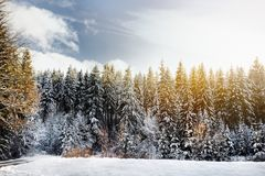 Scenic view with pine forest of the Bavarian Alps in winter. Sunny snowy day in the mountains. Bavaria, Germany stock photography