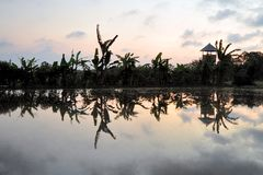 Scenic view of rice fields with reflections, Ubud Stock Images