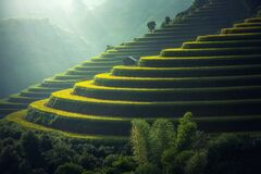 Scenic View of Rice Paddy Royalty Free Stock Photography
