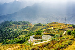 Scenic view of rice terraces filled with water in Vietnam Stock Photography