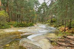 Scenic view of a river in the forest in Boca del Asno natural park on a rainy day in Segovia, Spain. Stock Photos