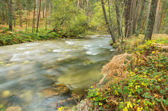 Scenic view of a river in the forest in Boca del Asno natural park on a rainy day in Segovia, Spain. Royalty Free Stock Photography