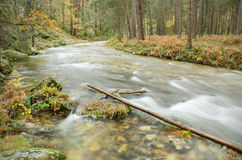 Scenic view of a river in the forest in Boca del Asno natural park on a rainy day in Segovia, Spain. Royalty Free Stock Photo