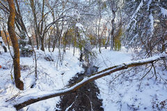 Scenic view of the river and trees covered by snow Stock Photography