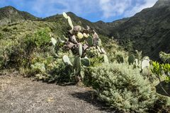 A scenic view of rocky landscape in anaga rural park , Tenerife royalty free stock image