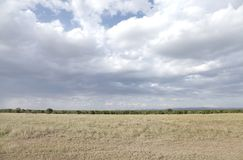 A scenic view with Savannah grassland and forest of Ol Pejeta Conservancy, Kenya Stock Photography