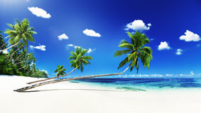Scenic View Sea Shore Sand Coconut Palm Trees Concept royalty free stock photo
