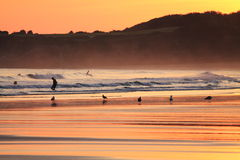 Scenic view of silhouette of people surfing on the beach and seagulls in colorful sunrise summer sky on a sandy beach Stock Photo