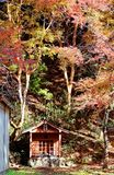 Scenic view of small Buddhist shrine under maple trees. In the autumn forest in Kyoto Japan Royalty Free Stock Photos