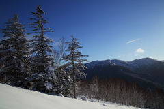 Scenic view of snow-covered fir trees and woody hills on a backg. Scenic view of snow-covered fir trees and woody hills in a background Stock Photo