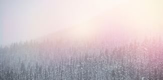 Snow covered trees during winter Stock Image