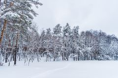 Scenic view of snow covered trees in winter forest royalty free stock photography
