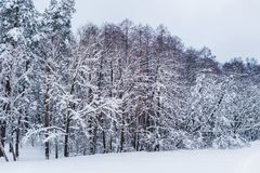 Scenic view of snow covered trees. In winter park stock image